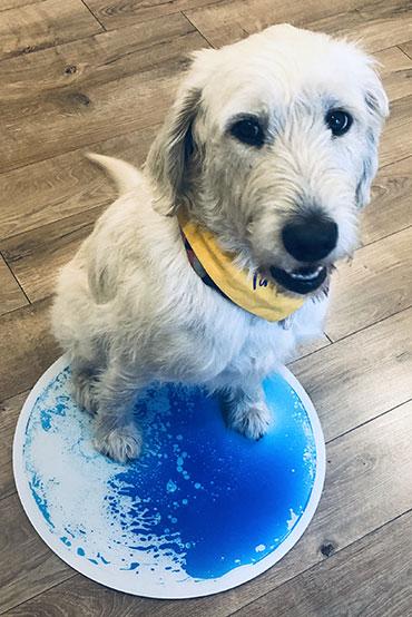 Kókusz terápiás kutya